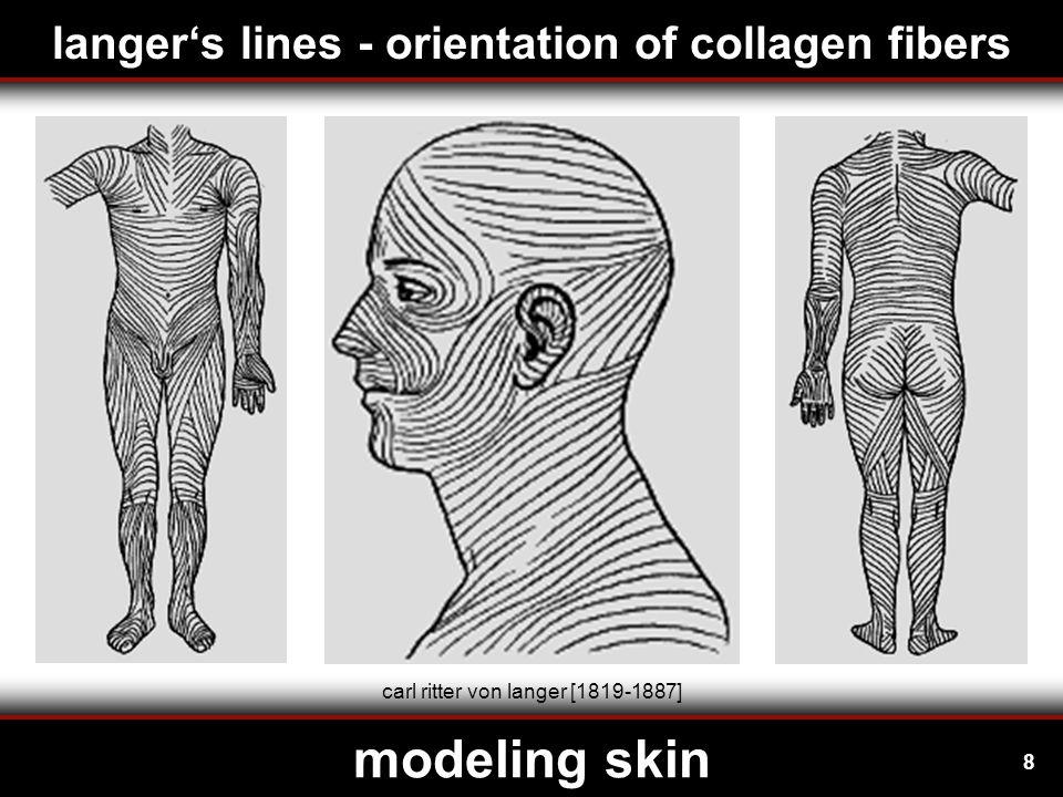 9 modeling skin amino acids collagen fibrils form collagen fiber three  chains form collagen triple helix about 1000 amino acids form collagen  chain prolinhydroxyprolinglycin collagen fibers - hierarchical microstructure