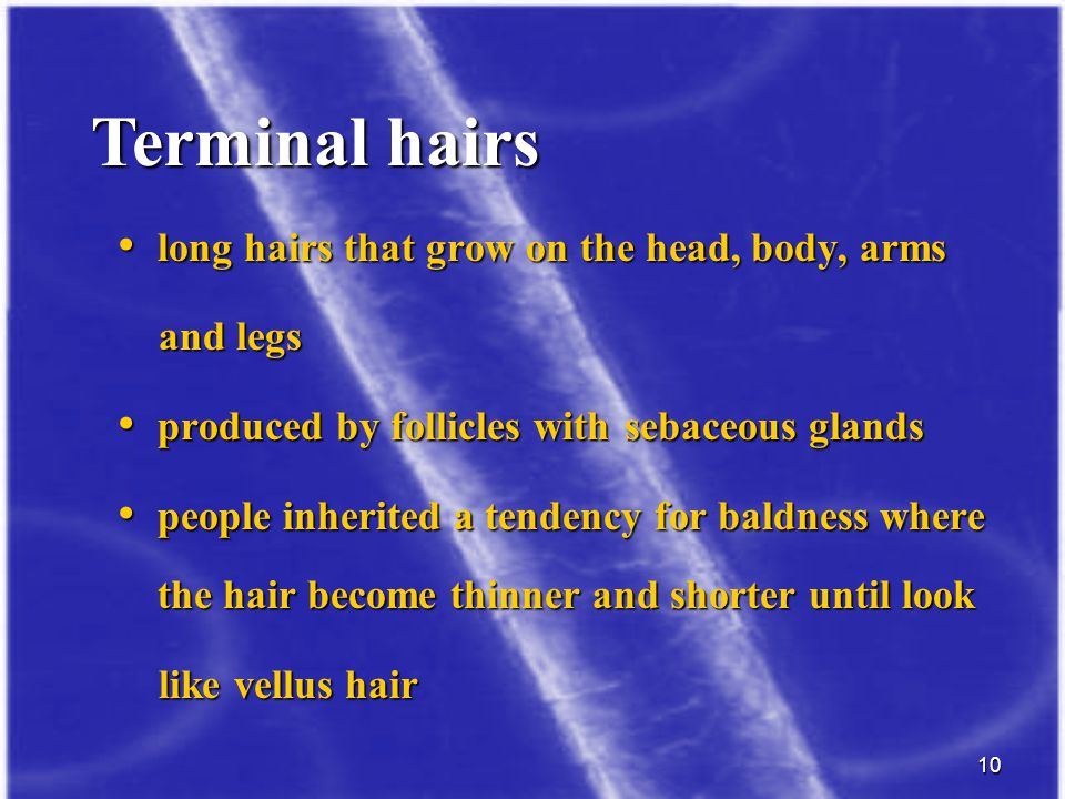 10 long hairs that grow on the head, body, arms long hairs that grow on the head, body, arms and legs and legs produced by follicles with sebaceous gl