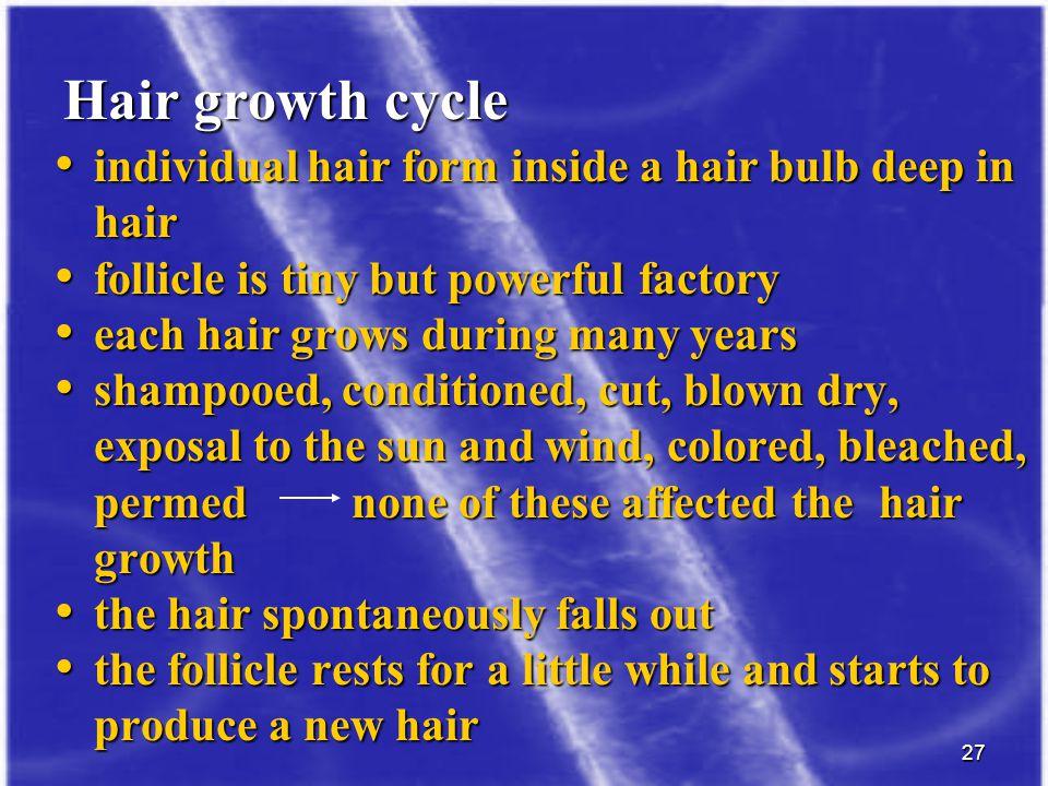 27 individual hair form inside a hair bulb deep in hair individual hair form inside a hair bulb deep in hair follicle is tiny but powerful factory fol