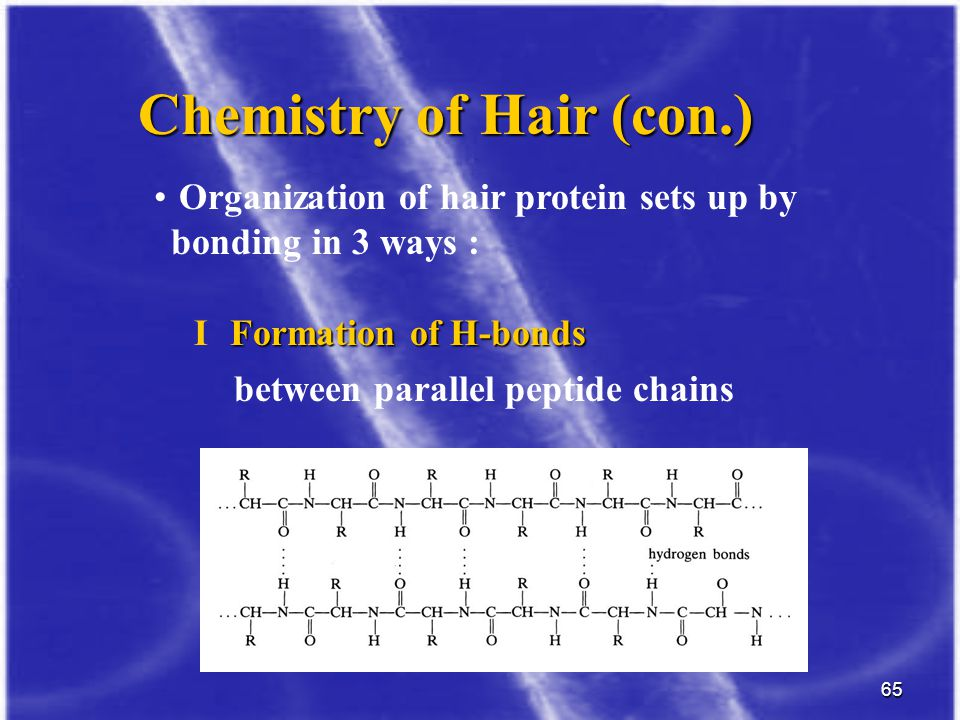 65 Organization of hair protein sets up by bonding in 3 ways : Chemistry of Hair (con.) between parallel peptide chains Formation of H-bonds I Formati