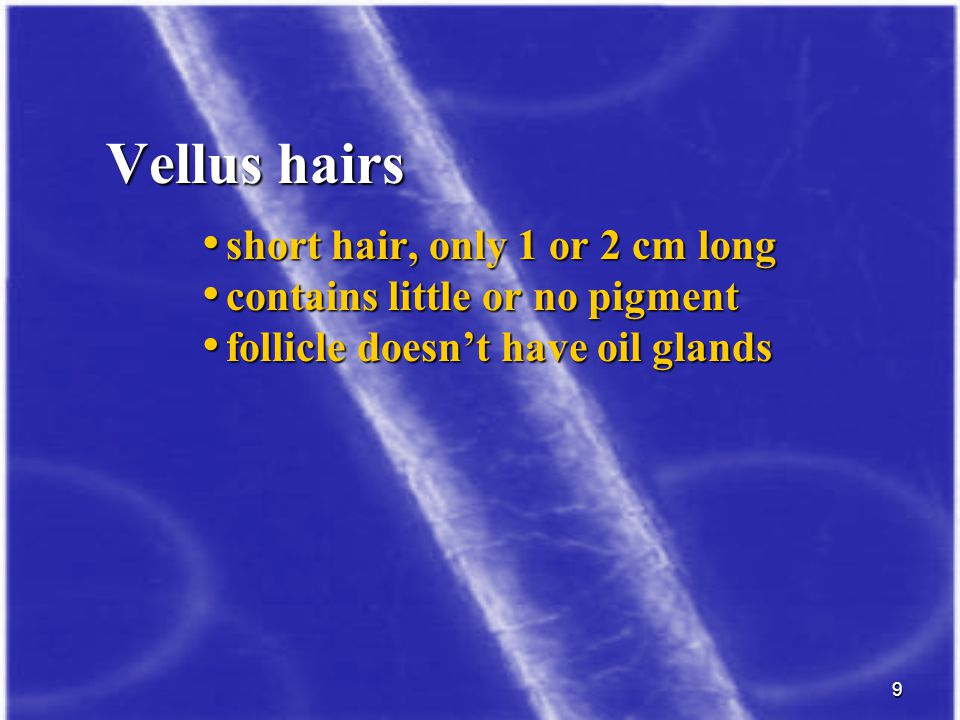 10 long hairs that grow on the head, body, arms long hairs that grow on the head, body, arms and legs and legs produced by follicles with sebaceous glands produced by follicles with sebaceous glands people inherited a tendency for baldness where the hair become thinner and shorter until look people inherited a tendency for baldness where the hair become thinner and shorter until look like vellus hair like vellus hair Terminal hairs