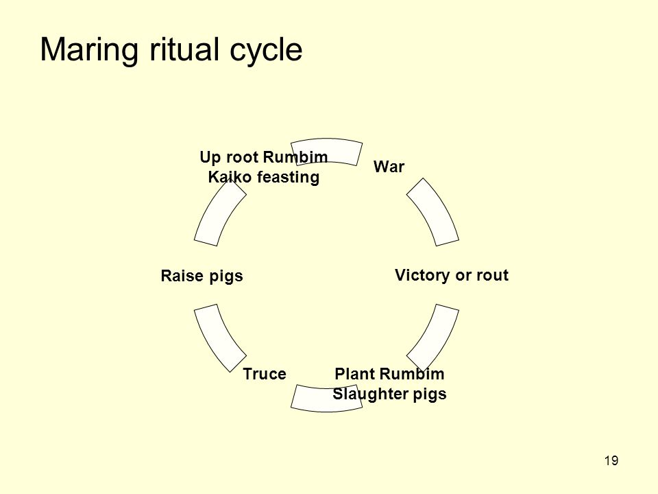 19 Maring ritual cycle Up root Rumbim Kaiko feasting Raise pigs Truce Plant Rumbim Slaughter pigs Victory or rout War