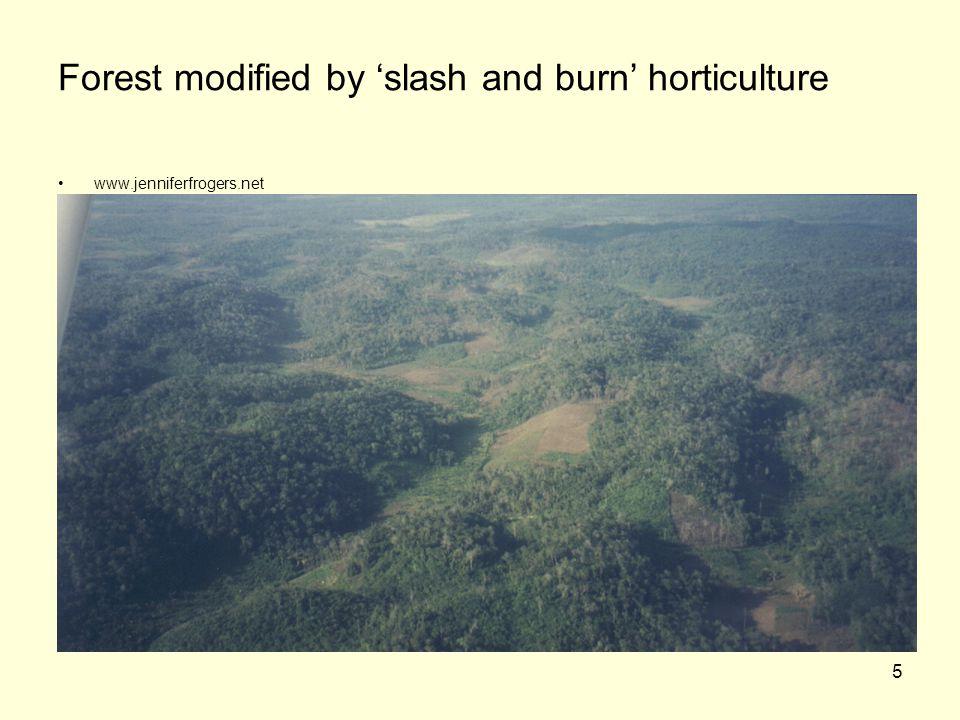 5 Forest modified by 'slash and burn' horticulture www.jenniferfrogers.net
