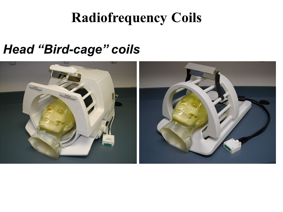 Head Bird-cage coils Radiofrequency Coils