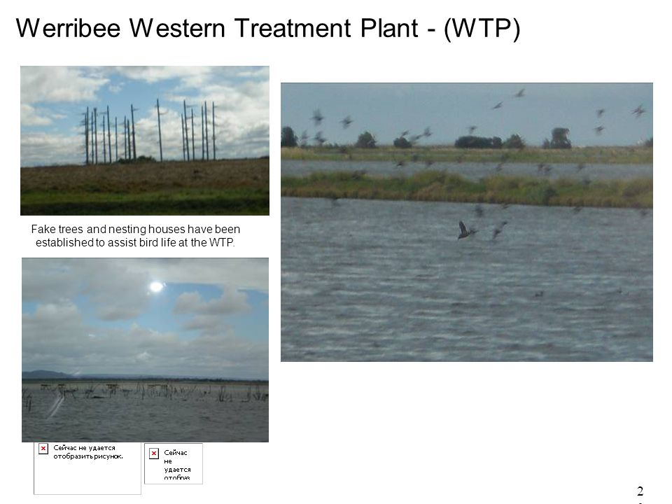 20 Werribee Western Treatment Plant - (WTP) Fake trees and nesting houses have been established to assist bird life at the WTP.