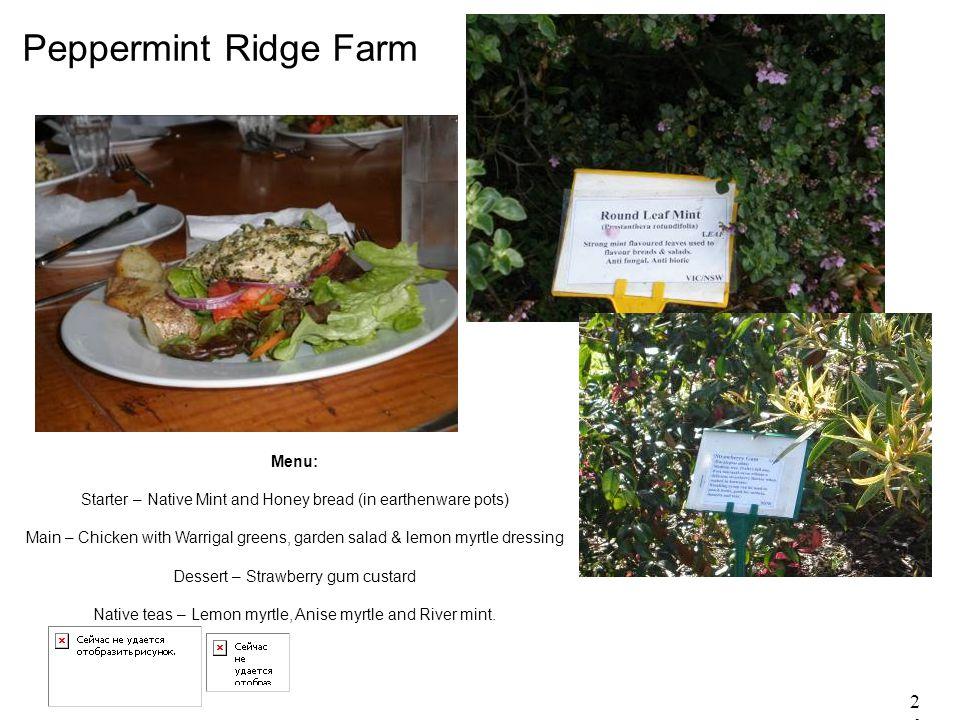 26 Peppermint Ridge Farm Menu: Starter – Native Mint and Honey bread (in earthenware pots) Main – Chicken with Warrigal greens, garden salad & lemon m