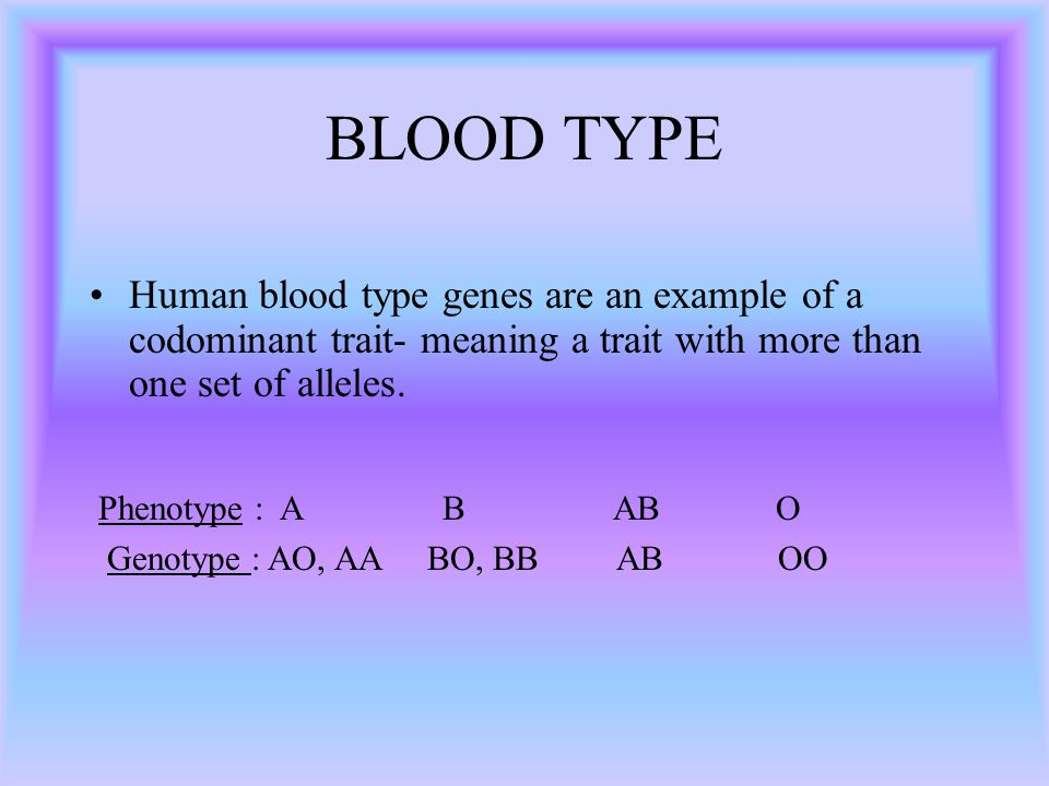 BLOOD TYPE Human blood type genes are an example of a codominant trait- meaning a trait with more than one set of alleles. Phenotype : A B AB O Genoty