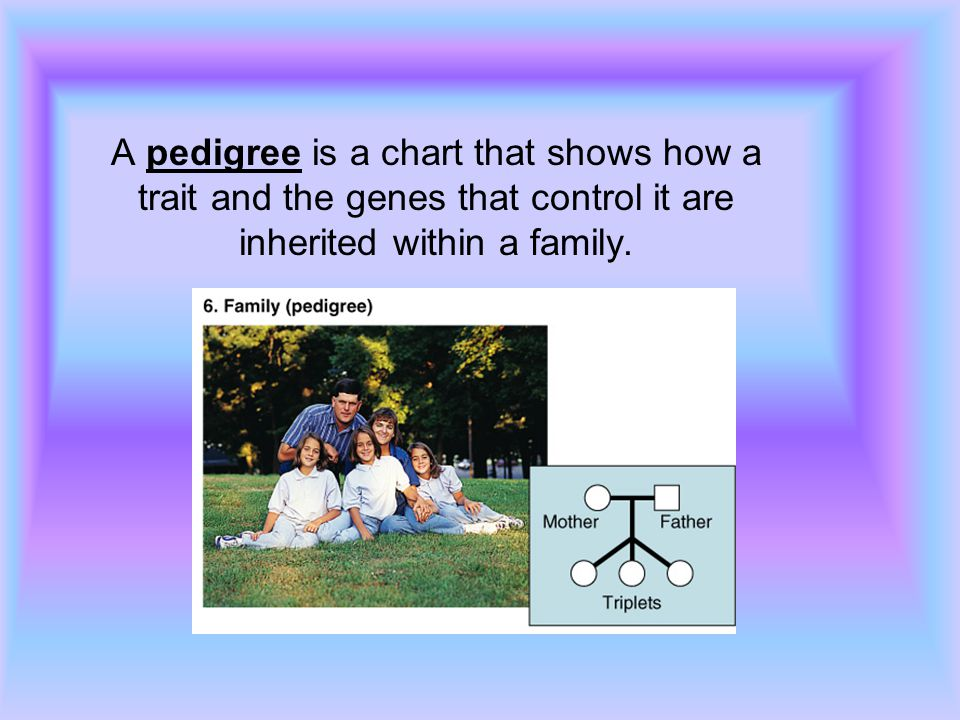 A pedigree is a chart that shows how a trait and the genes that control it are inherited within a family.