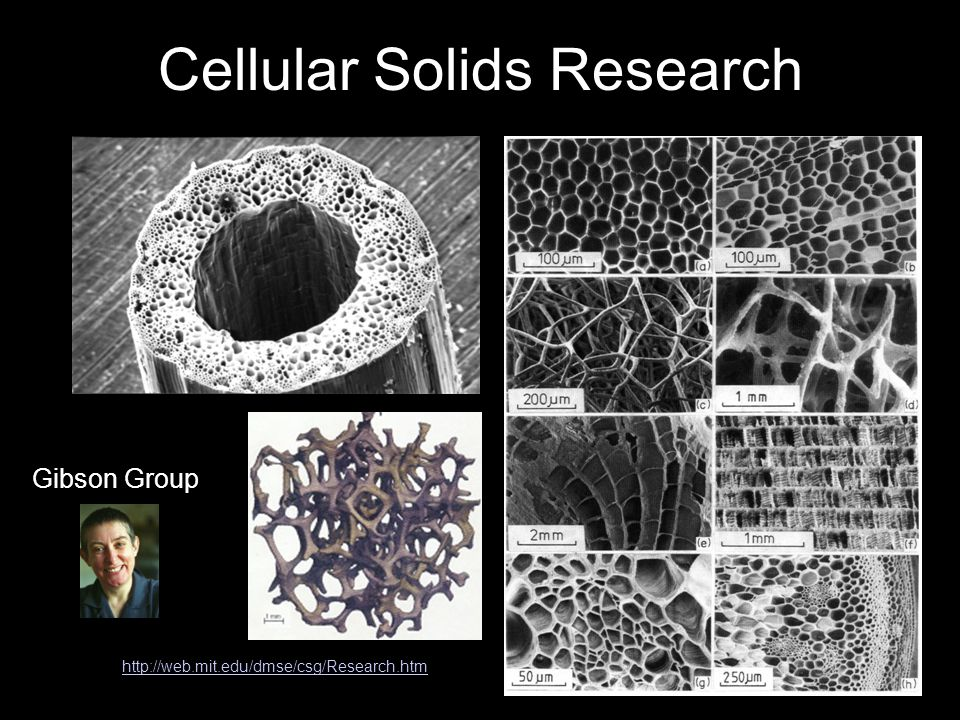 Cellular Solids Research http://web.mit.edu/dmse/csg/Research.htm Gibson Group