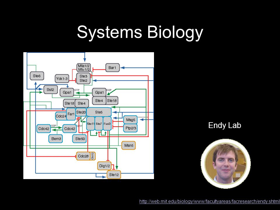 Systems Biology Endy Lab http://web.mit.edu/biology/www/facultyareas/facresearch/endy.shtml