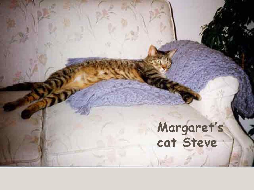 Margaret's cat Steve