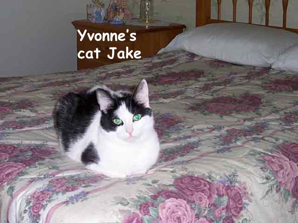 Yvonne's cats Jake & Elwood Yvonne's cat Jake