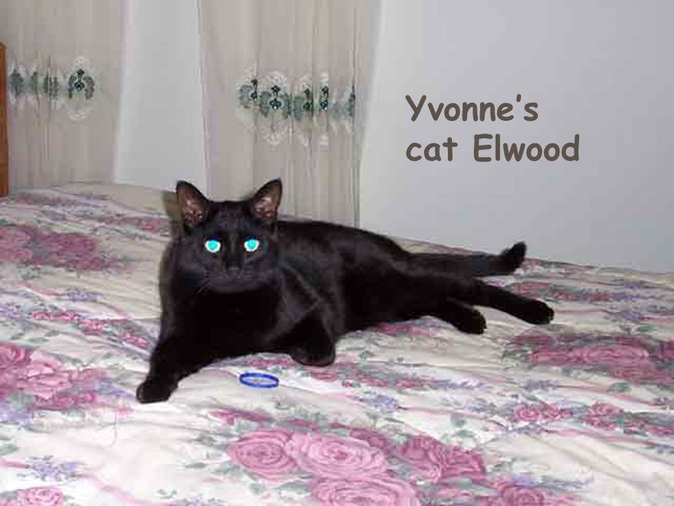 Yvonne's cats Jake & Elwood Yvonne's cat Elwood