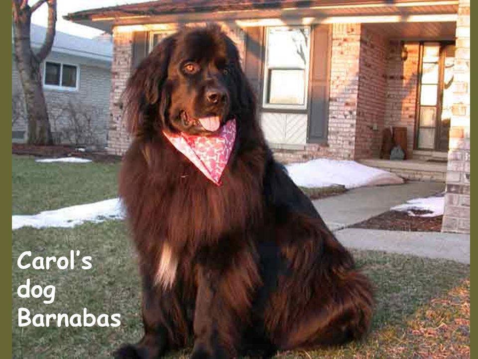 Carol's dog Barnabas