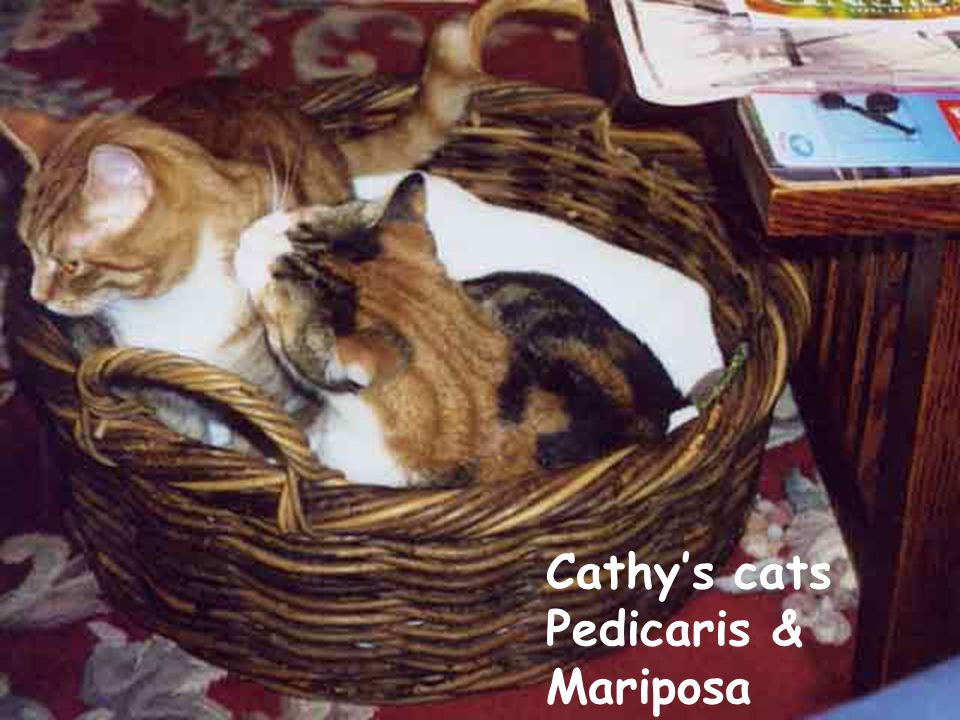 Cathy's cats Pedicaris & Mariposa