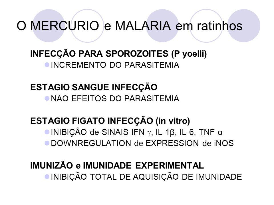 O MERCURIO e MALARIA em ratinhos INFECÇÃO PARA SPOROZOITES (P yoelli) INCREMENTO DO PARASITEMIA ESTAGIO SANGUE INFECÇÃO NAO EFEITOS DO PARASITEMIA ESTAGIO FIGATO INFECÇÃO (in vitro) INIBIÇÃO de SINAIS IFN- , IL-1β, IL-6, TNF-α DOWNREGULATION de EXPRESSION de iNOS IMUNIZÃO e IMUNIDADE EXPERIMENTAL INIBIÇÃO TOTAL DE AQUISIÇÃO DE IMUNIDADE