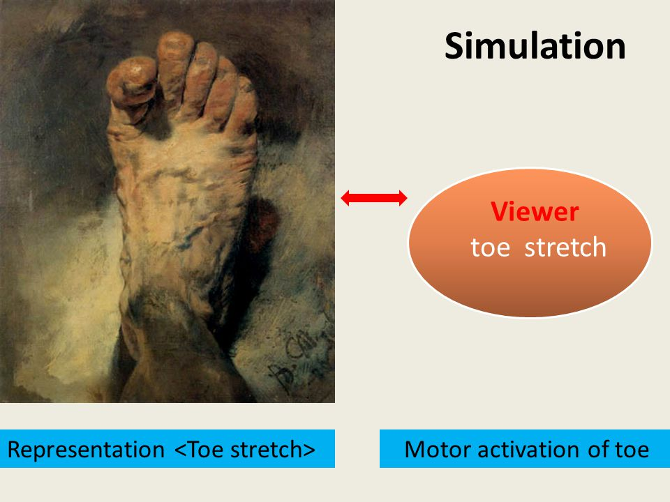 Motor activation of toe Viewer toe stretch Representation Simulation