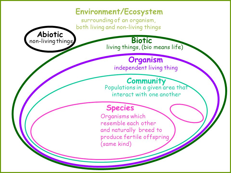 Environment/Ecosystem Organism independent living thing Abiotic Biotic Species Community surrounding of an organism, both living and non-living things non-living things living things, (bio means life) Populations in a given area that interact with one another Organisms which resemble each other and naturally breed to produce fertile offspring (same kind)