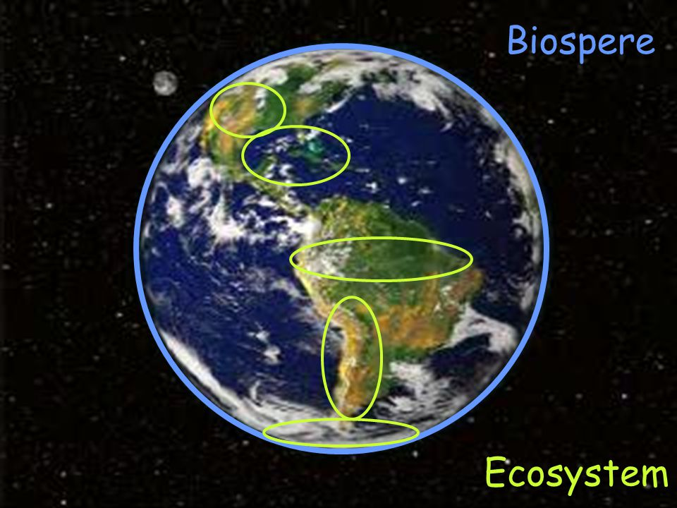 Biospere Ecosystem