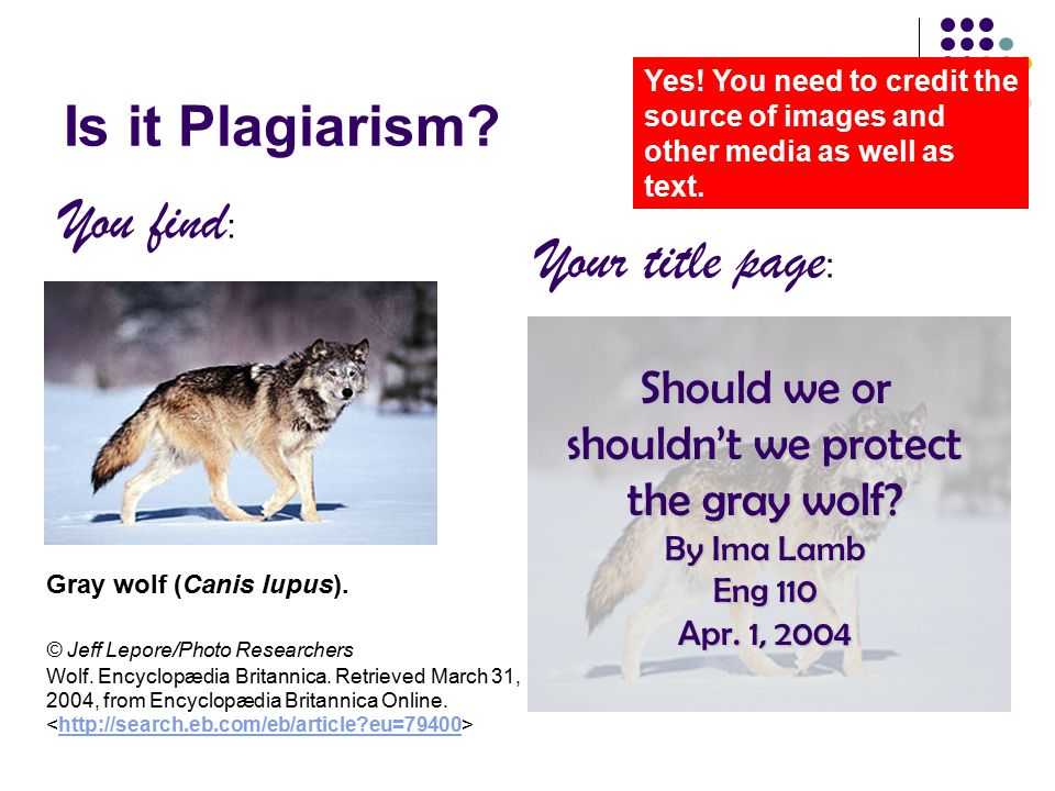Is it Plagiarism? Yes! You need to credit the source of images and other media as well as text. Gray wolf (Canis lupus). © Jeff Lepore/Photo Researche