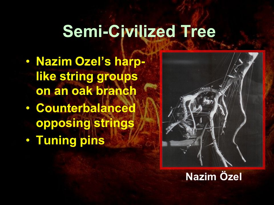 Semi-Civilized Tree Nazim Ozel's harp- like string groups on an oak branch Counterbalanced opposing strings Tuning pins Nazim Özel