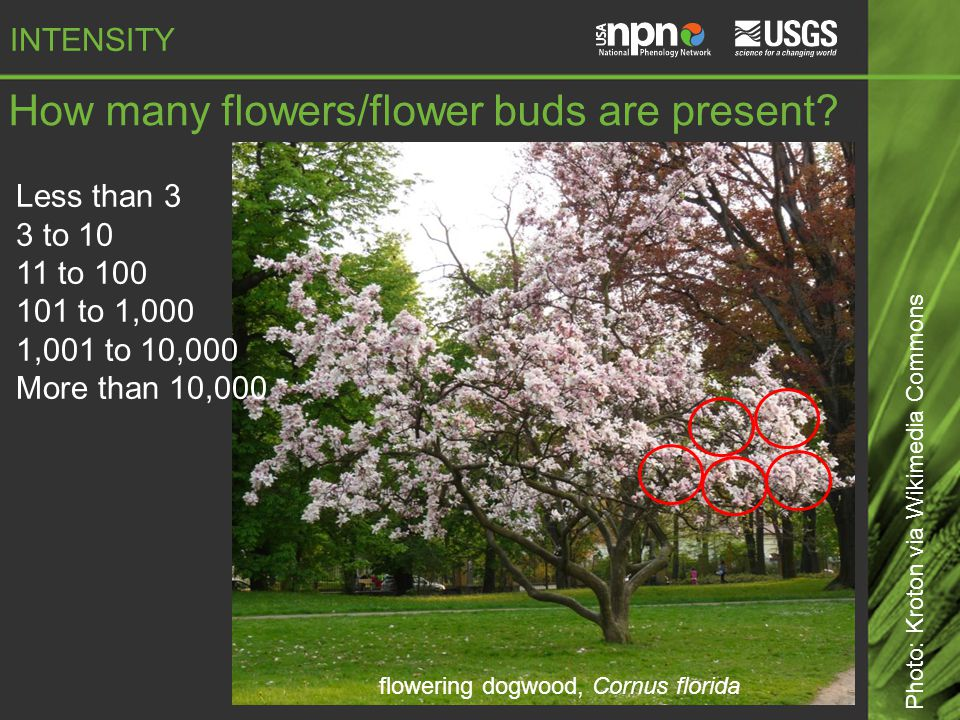 How many flowers/flower buds are present.
