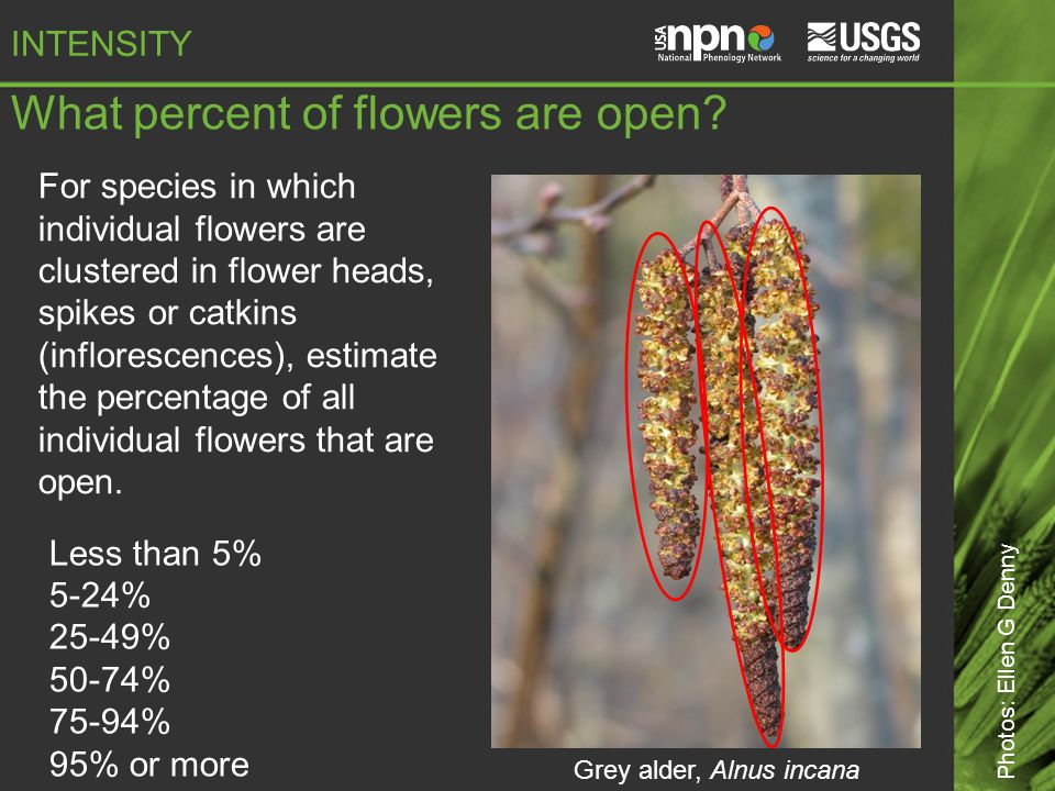 What percent of flowers are open.