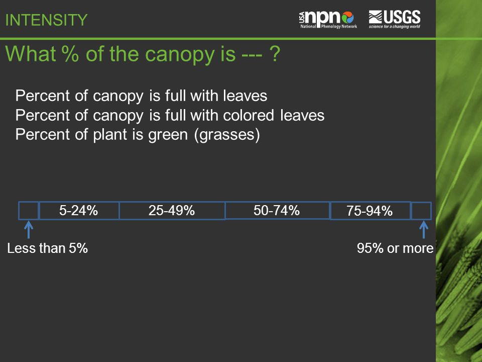 What % of the canopy is --- .