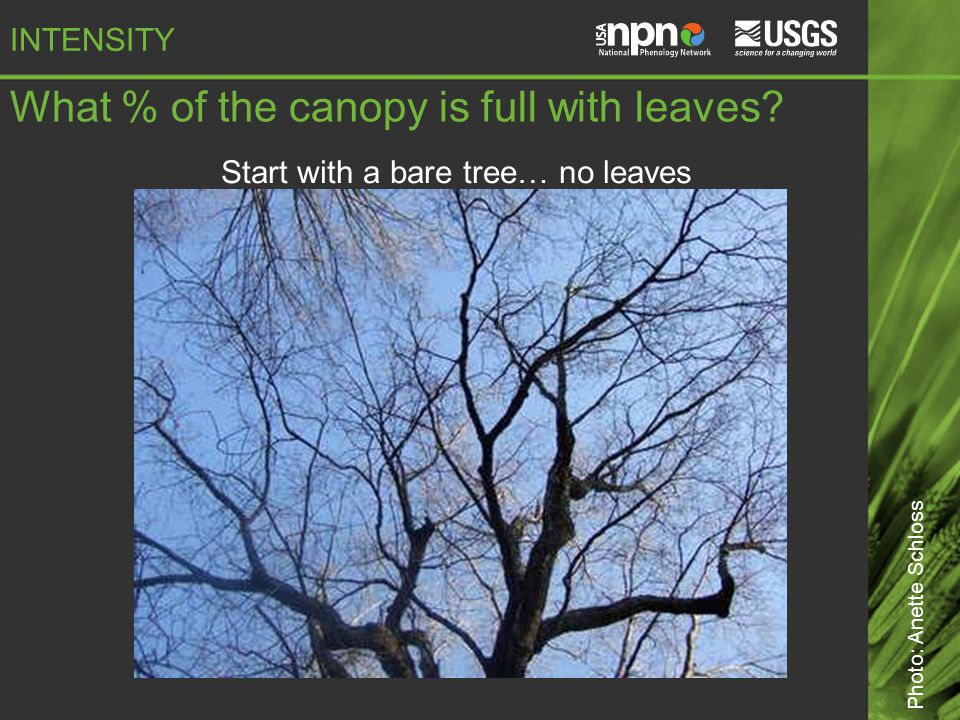 What % of the canopy is full with leaves.