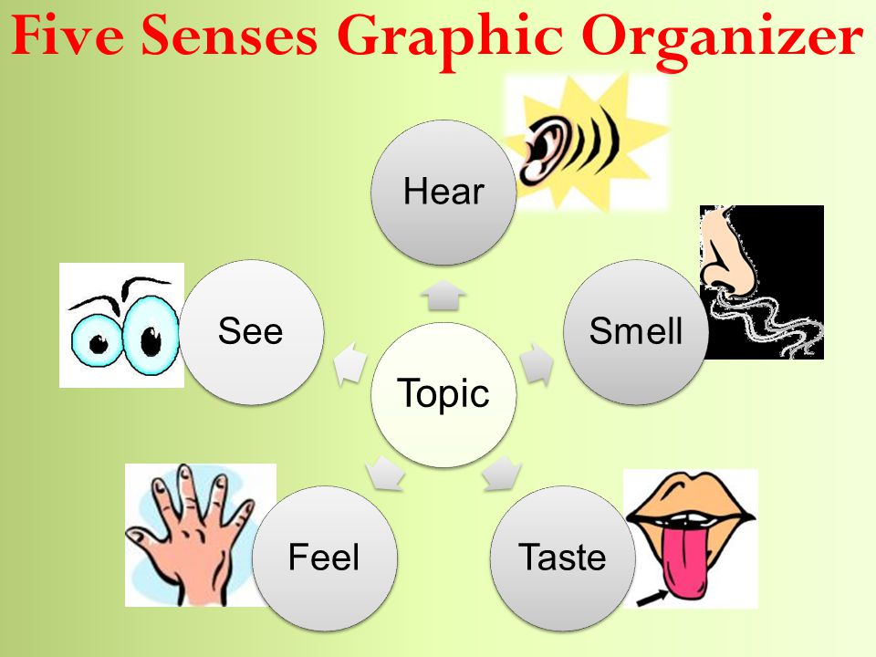 Five Senses Graphic Organizer Topic HearSmellTasteFeelSee