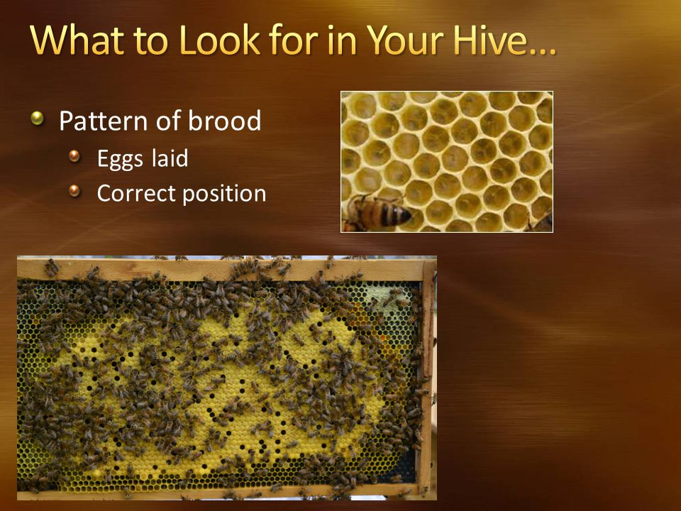 Pattern of brood Eggs laid Correct position