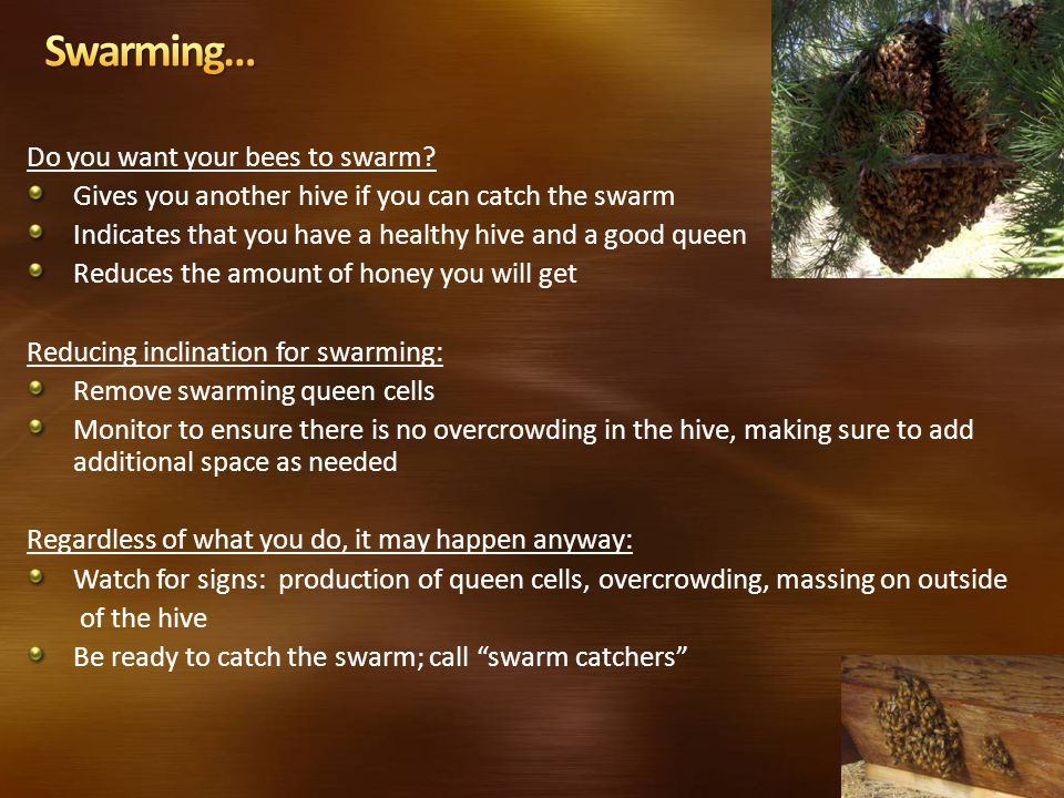 Do you want your bees to swarm.