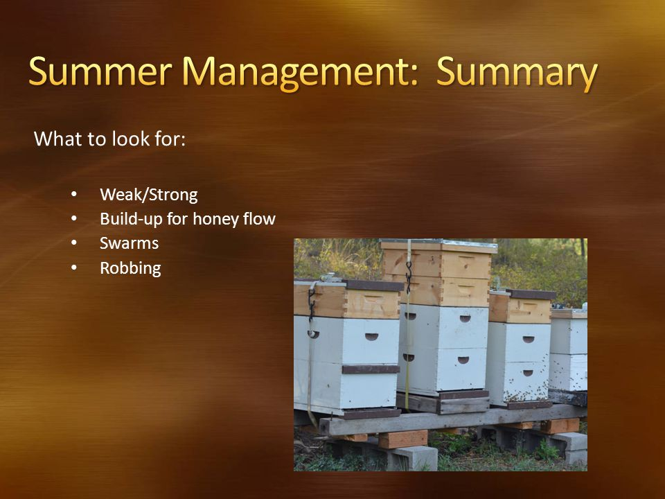 What to look for: Weak/Strong Build-up for honey flow Swarms Robbing