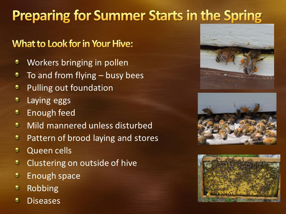 Workers bringing in pollen To and from flying – busy bees Pulling out foundation Laying eggs Enough feed Mild mannered unless disturbed Pattern of brood laying and stores Queen cells Clustering on outside of hive Enough space Robbing Diseases