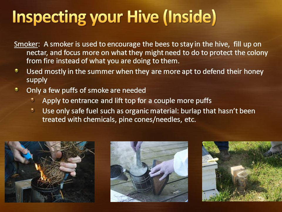 Smoker: A smoker is used to encourage the bees to stay in the hive, fill up on nectar, and focus more on what they might need to do to protect the colony from fire instead of what you are doing to them.