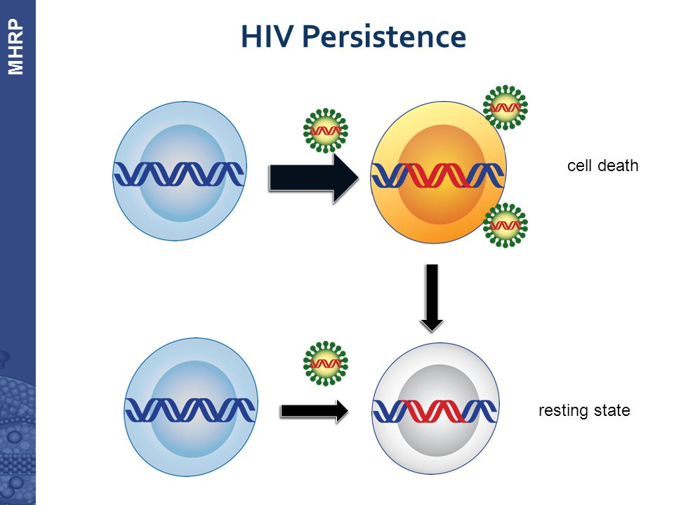 MHRP  HIV Persistence cell death resting state