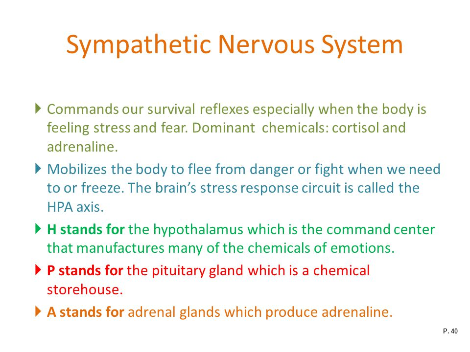 Sympathetic Nervous System  Commands our survival reflexes especially when the body is feeling stress and fear.