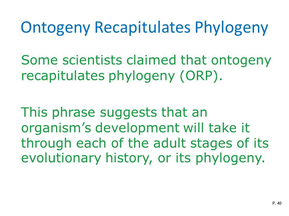 Ontogeny Recapitulates Phylogeny Some scientists claimed that ontogeny recapitulates phylogeny (ORP).
