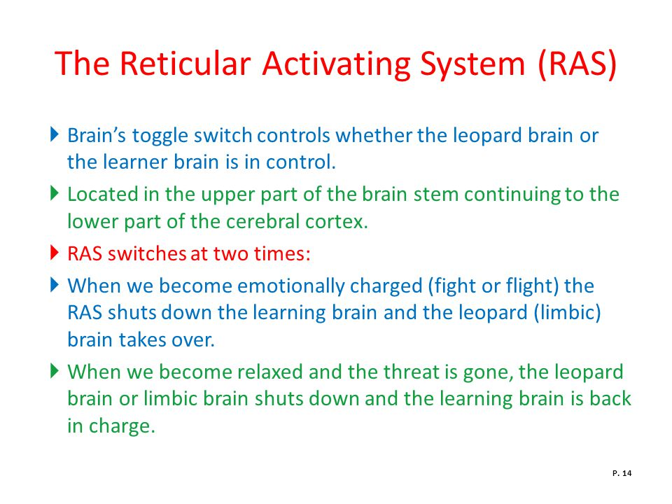The Reticular Activating System (RAS)  Brain's toggle switch controls whether the leopard brain or the learner brain is in control.