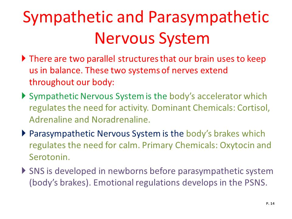 Sympathetic and Parasympathetic Nervous System  There are two parallel structures that our brain uses to keep us in balance.
