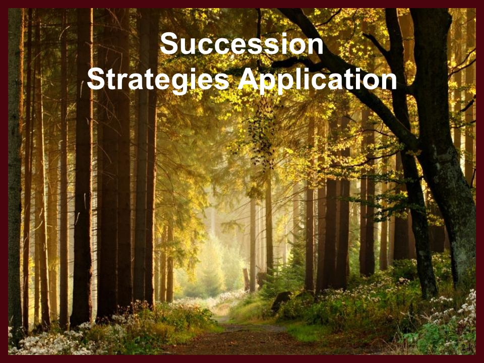 Succession Strategies Application 24