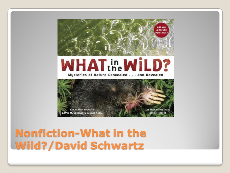 Nonfiction-What in the Wild /David Schwartz