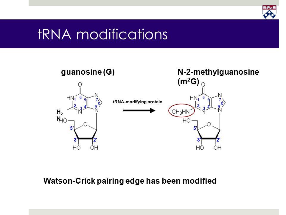 N-2-methylguanosine (m 2 G) guanosine (G) H2NH2N 1 2 3 4 5 6 7 8 9 1 2 4 5 6 7 8 9 3 3'2' 5' 3'2' 5' tRNA-modifying protein Watson-Crick pairing edge