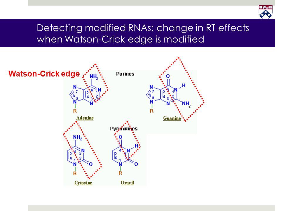 Watson-Crick edge Detecting modified RNAs: change in RT effects when Watson-Crick edge is modified