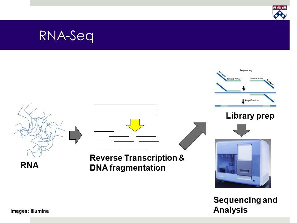 RNA-Seq RNA Library prep Sequencing and Analysis Images: illumina Reverse Transcription & DNA fragmentation