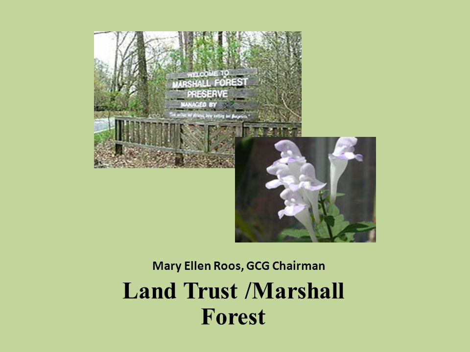 Mary Ellen Roos, GCG Chairman Land Trust /Marshall Forest
