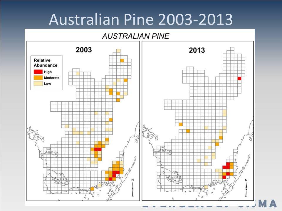 Australian Pine 2003-2013