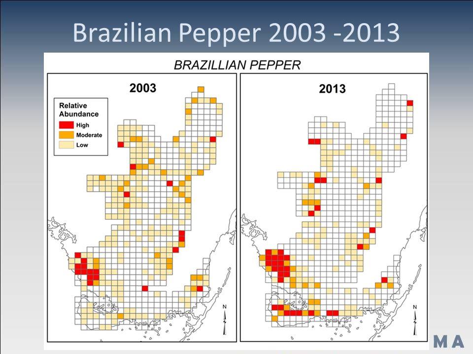 Brazilian Pepper 2003 -2013