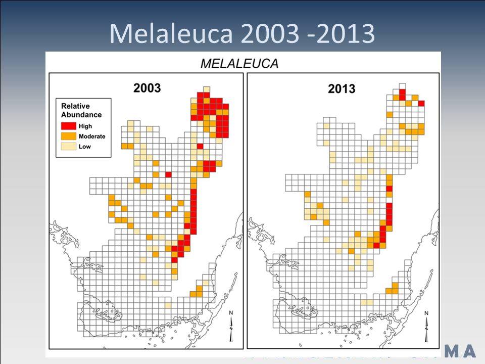 Melaleuca 2003 -2013