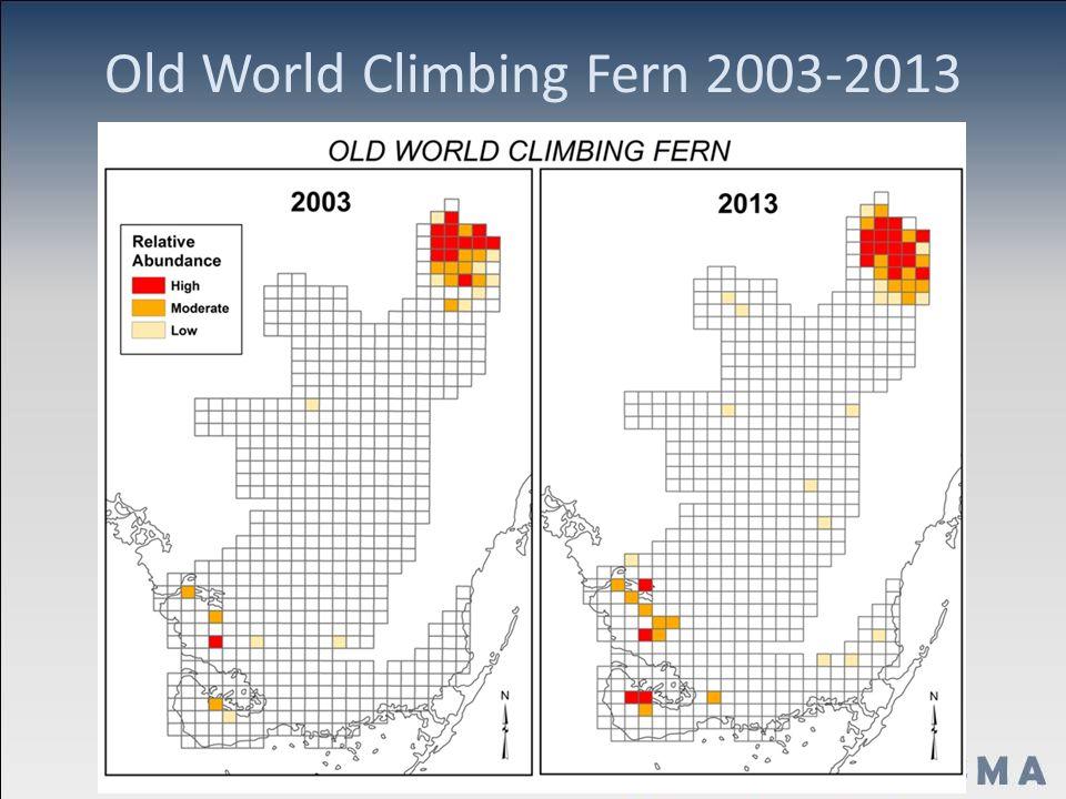 Old World Climbing Fern 2003-2013